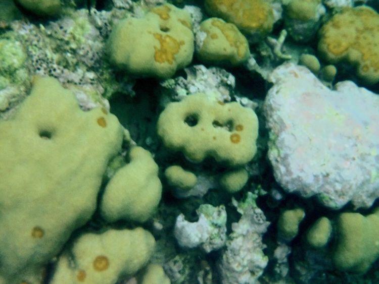 Corales Coral Reef Mexico Akumal