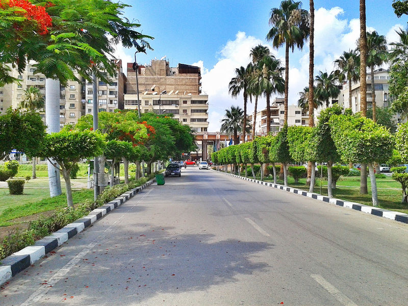 Streets Architecture Building Exterior Built Structure City Day Growth Nature No People Outdoors Palm Tree Road Sky Street The Way Forward Tree