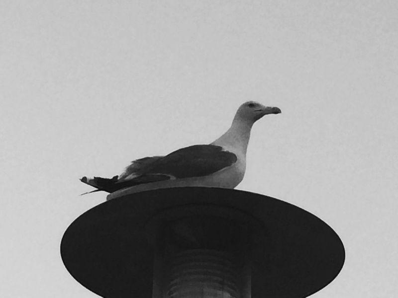 View Magicmoment Captured Moment Oiseaux Birds