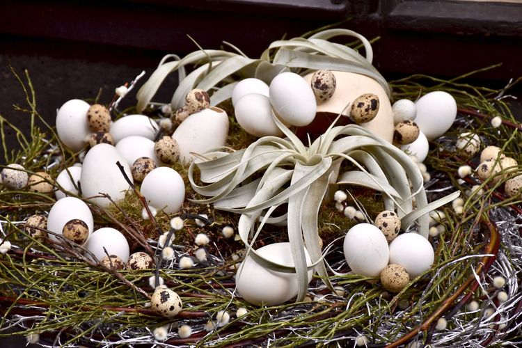 High angle view of eggs in nest