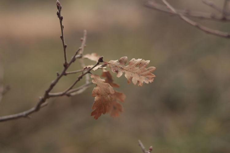 EyeEm Nature Lover Browndog Close-up Freshness Growth Leaves Nature Oak Tree