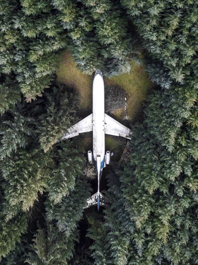 Directly Above Shot Of Abandoned Airplane Amidst Trees In Forest