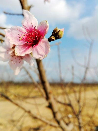 The Best Flower 🌹👌 Farm حديقة نباتات زهرة بنفسجي White Flaower زهرة الخوخ Red Flower Orange Flower 🌹🌹 زهرة بيضاء زهرة حمراء EyeEm Selects