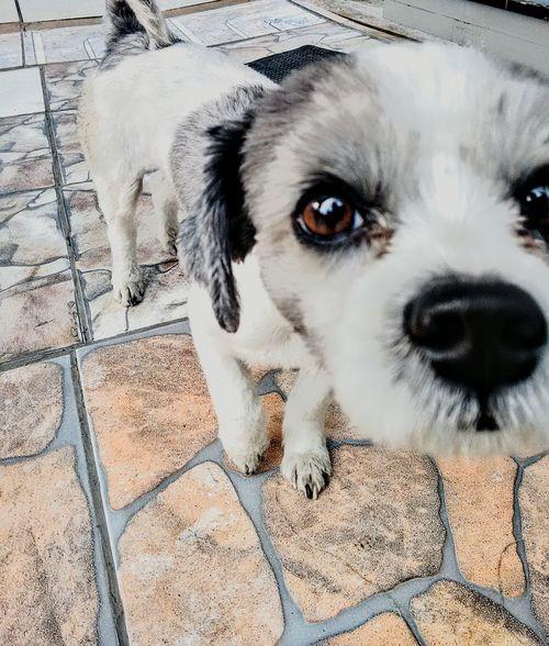 E ele.... Dog Animal Cute Eyes Animal Cachorro Fofo Olho Lindo