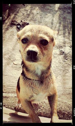 My bby <3 Dog Love Shower Enjoying Life Maylo #could