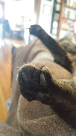 backlit kitty paws Cats Backlit Fuzzy Neutral Warmtone