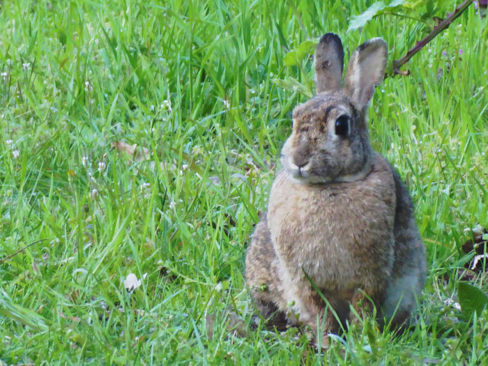 😍😍😍 Cute♡ For My Friends 😍😘🎁 Lucky Me🦄 L❣O❣V❣E❣I❣T❣ Rabbits 🐇 Nature Is My Sanctuary 🌳💚 Nature Is My Religion H🌞A🌞P🌞P🌞Y🌞 The Dark Days Are Gone..🤗 On My Way Home Today Field Animal Themes Grass Close-up Green Color