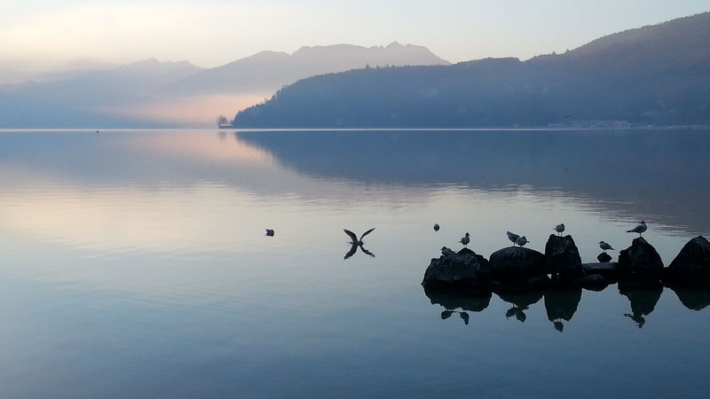 Landscape No Filter, No Edit, Just PhotographyTranquility Tranquility Reflection Lake Water Outdoors Blue No People Beauty In Nature Animal Themes Sunrise... Lake Annecy France  Seagulls At The Lake Seagull Serenity Early Morning Earlybird Quietness The Week On EyeEm Lost In The Landscape