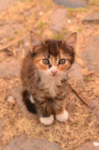 High Angle Portrait Of Kitten On Field