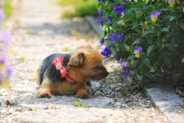 ももたん、庭でまったり💕 Dog Pets One Animal Domestic Animals Flower Nature EyeEm Best Shots