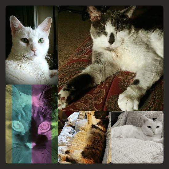 Eyeemkittys Eyemcat Ilovemypets My Kitty Ilovemycat Cutepet