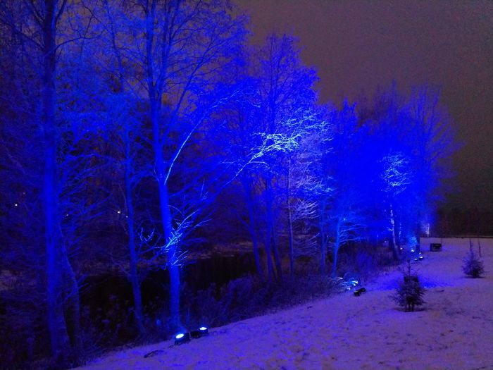 Blue trees Night Illuminated Blue Outdoors Nature Tree Snow No Filter Light Wintertime Nightfall