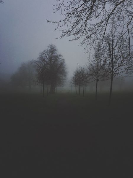 A perfect day... Foggy Foggy Morning Foggy Weather Running CantSleep TooEarly Tree Nature Fog Tranquility Bare Tree Mist Branch Hazy  Non-urban Scene No People Beauty In Nature Tadaa Community Shot With Love