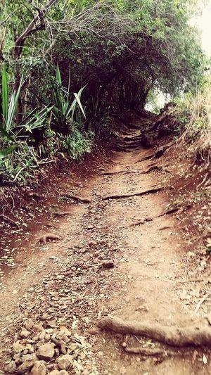 Chemin Dassy Reunion Island EyeEmNewHere Trail Running Sentier Trees Mountain Sand Sunlight High Angle View Close-up Plant