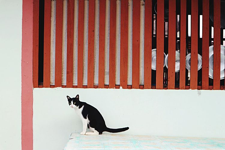Domestic Cat Pets Animal Themes One Animal Domestic Animals Feline Cat Mammal No People Built Structure Day Outdoors Architecture Corrugated Iron Building Exterior