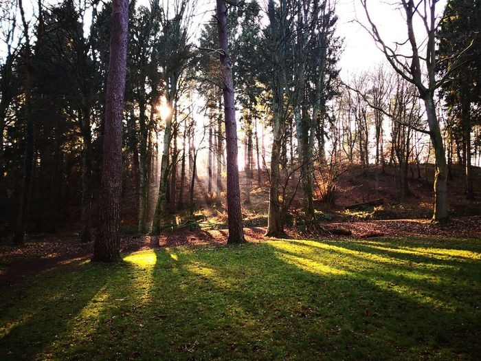 The sunshine produced some lovely rays through the trees Woods Bare Tree Woodland Walk Field Sunshine Cold And Crisp Nature Contrast Country Walks Life 3 Filter Huawei Mate 10 Pro Sunny Gateshead Tyne And Wear Woodlands Tranquility Sun Beams Sun Rays Trees Sky Grass Countryside Hazy  Calm