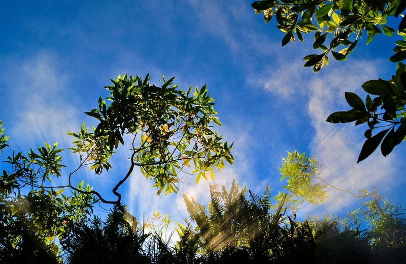INDONESIA Morning Morning Light Morning Sunshine Mt. Batur Steam Steamy Sunrays Beauty In Nature Blue Branch Cloud - Sky Growth Leaf Low Angle View Nature Outdoors Sky Sunshine Tree Vulcanic Landscape Vulcano Vulcano Island
