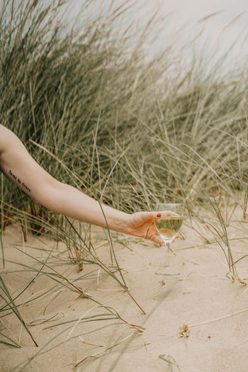 One Person Plant Human Body Part Real People Land Nature Human Hand Day Sand Hand Grass Body Part Beach Holding One Animal Leisure Activity Animal Wildlife Outdoors Finger Marram Grass