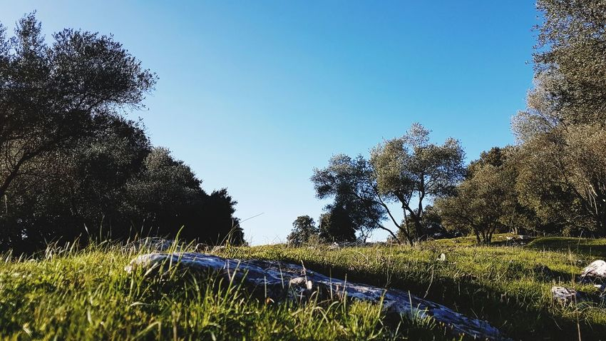 Les Cévennes Cévennes France Countryside Life Sitting On The Grass Tree Water Sky Close-up Growing Grassland Grassland