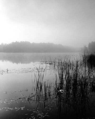 Misty mornings MADE IN SWEDEN Calmwater Bw_nature Foggy Morning Misty Morning