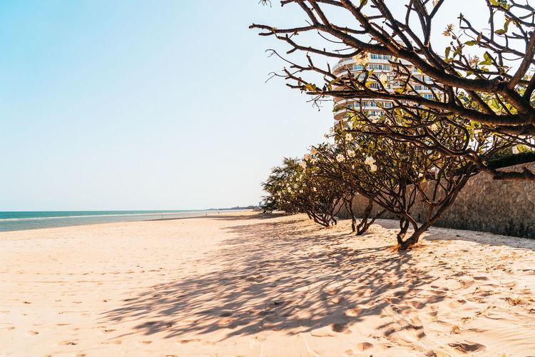 Trees on beach against clear sky