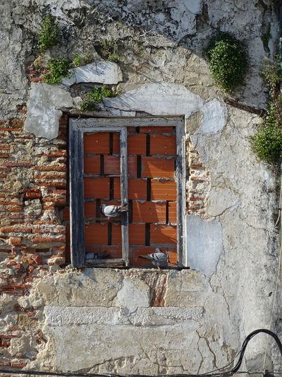 Alcácer do Sal - Alentejo - Portugal Alcacer Do Sal Alentejo Ave Birds Janela Pigeon Pombal Portugal Ruin Ruina Winter