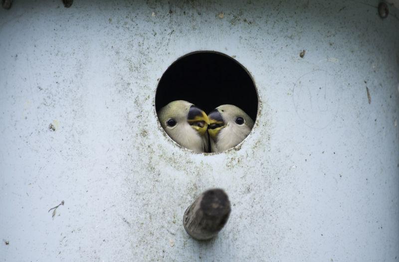 Bird Love.