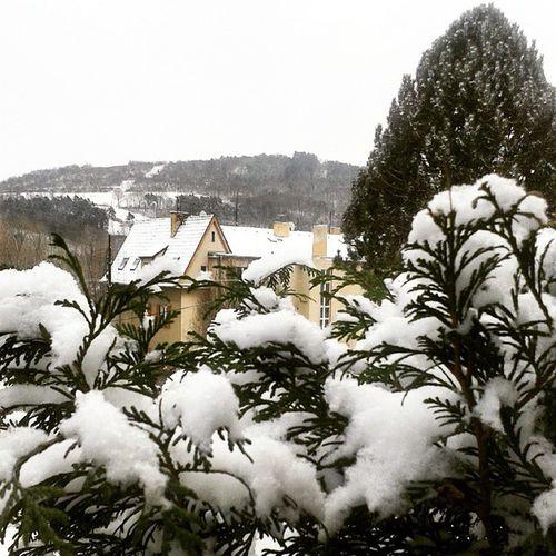 Snow Winter Nature Beautiful