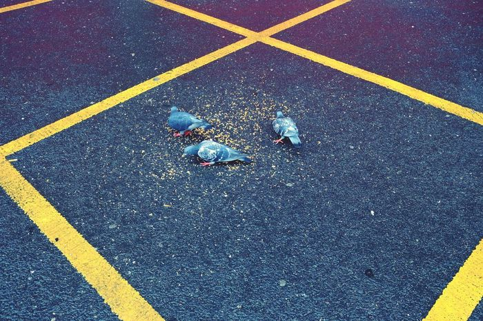 Pigeons Three Yellow Full Frame Asphalt Multi Colored High Angle View Textured  Sport Backgrounds Close-up