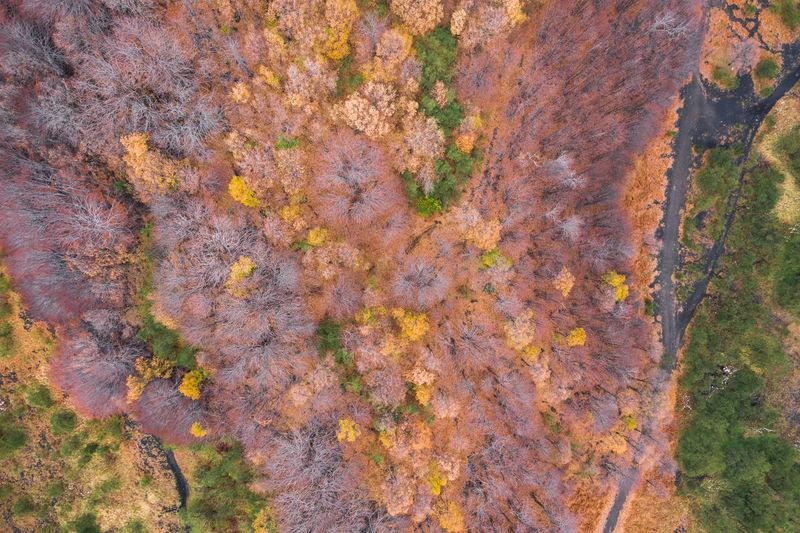 Full frame shot of autumn tree