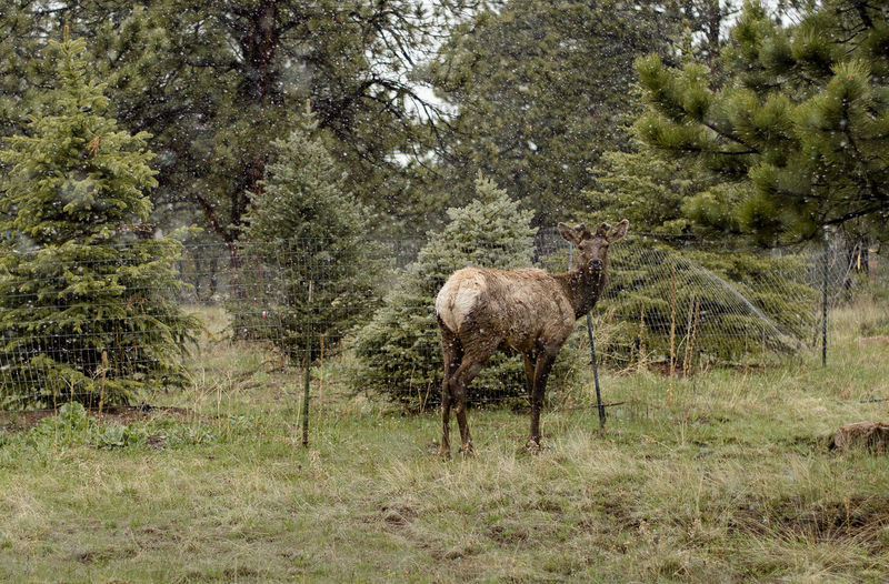 Elk Colorado Estes Park, CO Wildlife DSLR Dslrphotography First Eyeem Photo