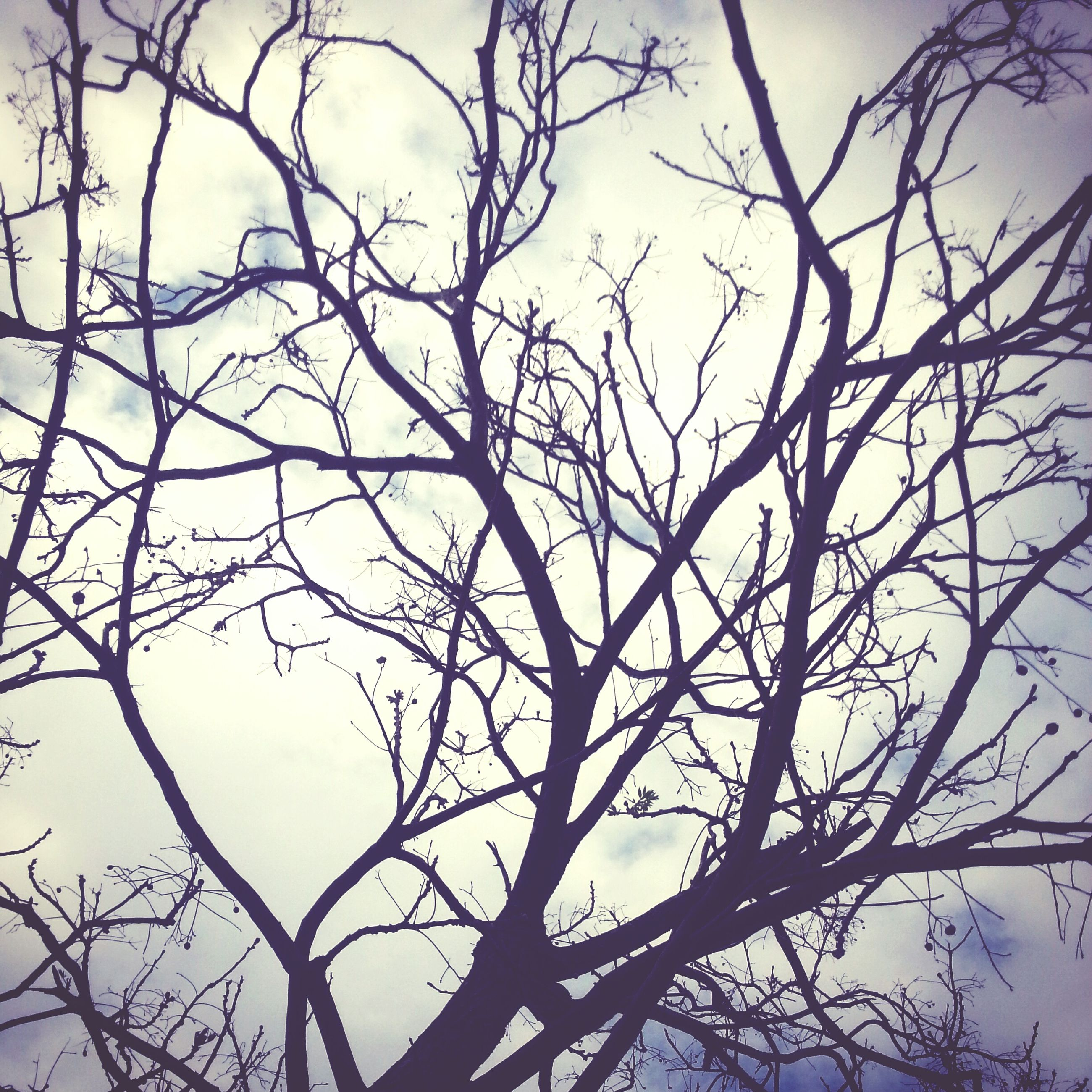 branch, bare tree, tree, low angle view, sky, nature, tranquility, beauty in nature, outdoors, clear sky, no people, growth, day, silhouette, scenics, twig, tree trunk, dead plant, cloud - sky, tranquil scene