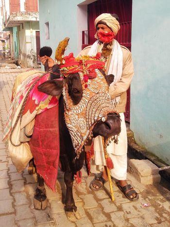Nandi The Bull Bull Nandi The Bull God Nandi Animal Themes Animal Spritualism Religious