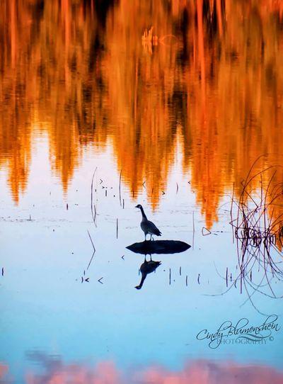 Autumn Reflections EyeEm Nature Lover EyeEm Masterclass Rsa_nature EyeEm Best Shots - Nature