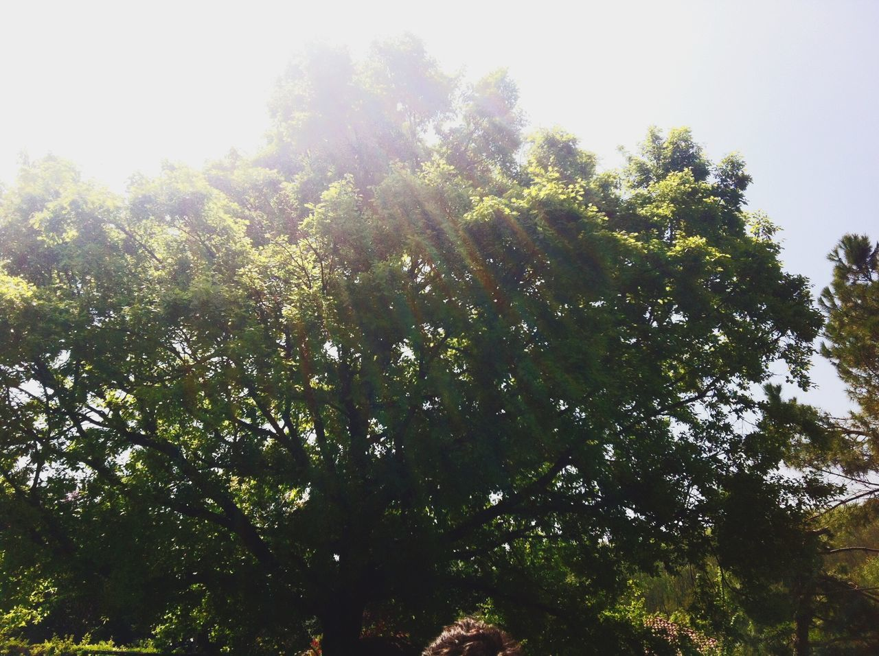 tree, nature, growth, tranquility, no people, low angle view, outdoors, beauty in nature, day, sky