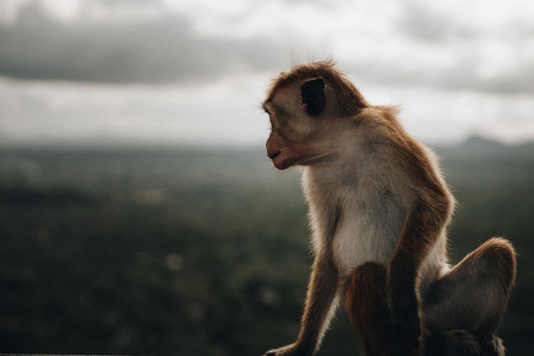 Close-up of monkey sitting against sky