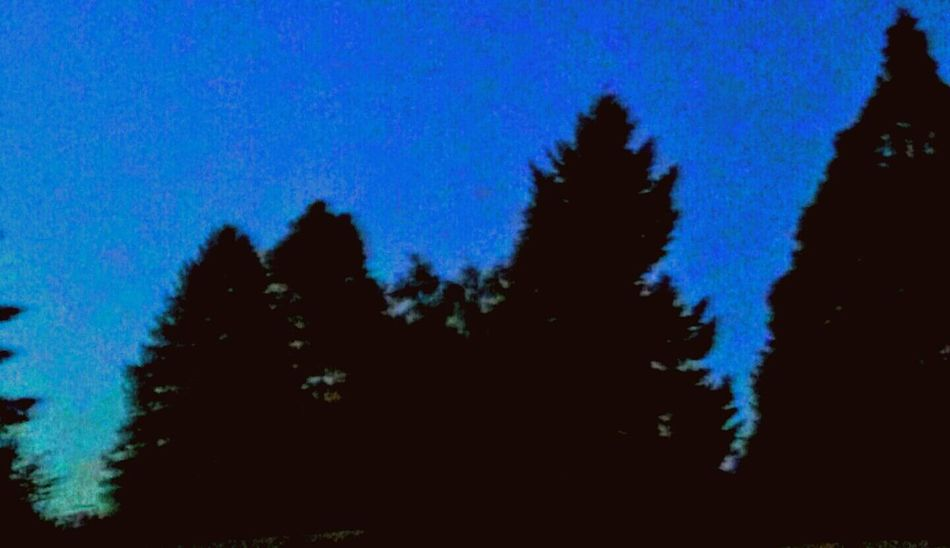 Tree Line Silhouette Nightimephotography 9pm Night Walk Enjoying Life My Neighborhood Peaceful Evening Trees And Sky Trees Come In Pounds