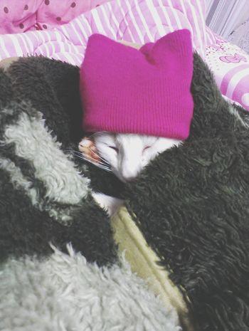 O frio ja chegou aqui. Cats Billy Sleep Cloud Love ♥