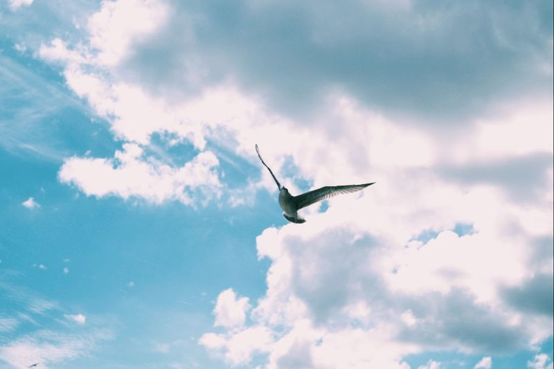 F r e e Bird Freedoom  Nature Cloud - Sky Sky Flying Travel Photography Day Beauty No People Beauty In Nature