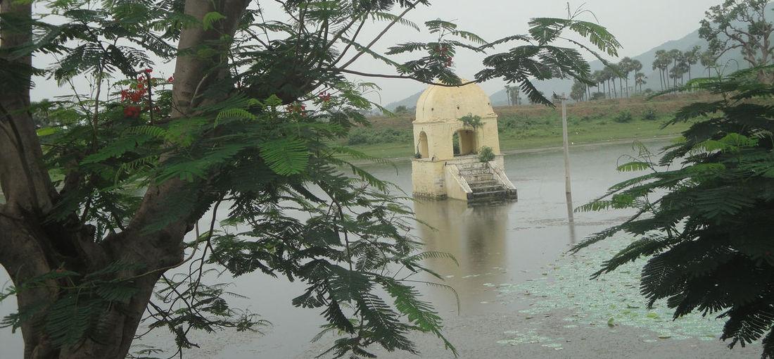 Temples Tree Trunk Trees Lake View Trees And Sky Vijayawada Water