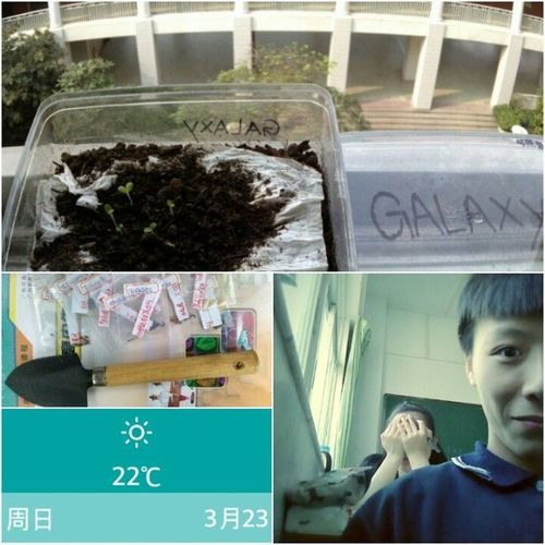 Planting With my Classmates ! Spring
