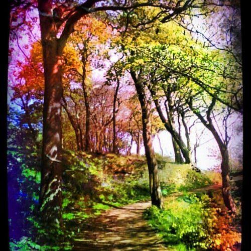 'Ravenscraig' Ravenscraig Kirkcaldy Fife  Scotland wood Forest Trees Winding Path Igers Instamagical instagrampolis instahub instamob primeshots