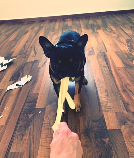 High angle view of dog sitting on wooden floor