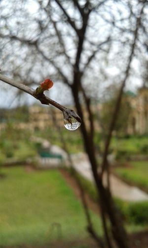 drop Animal Themes Animals In The Wild Beauty In Nature Bird Branch Close-up Day Flower Flying Fragility Freshness Growth Lovely Nature No People One Animal Outdoors Rain Rainy Tree Waterdrop