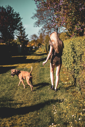 Rear view of woman walking with dog on grassy field