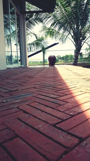 Alone Brick Floor Peaceful Countryside Light And Shade Tree Shadow