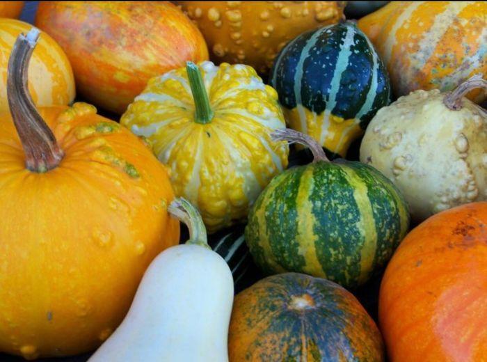 Colorsplash Ghords Autumn Fall Freshness Pumpkin Vegetable
