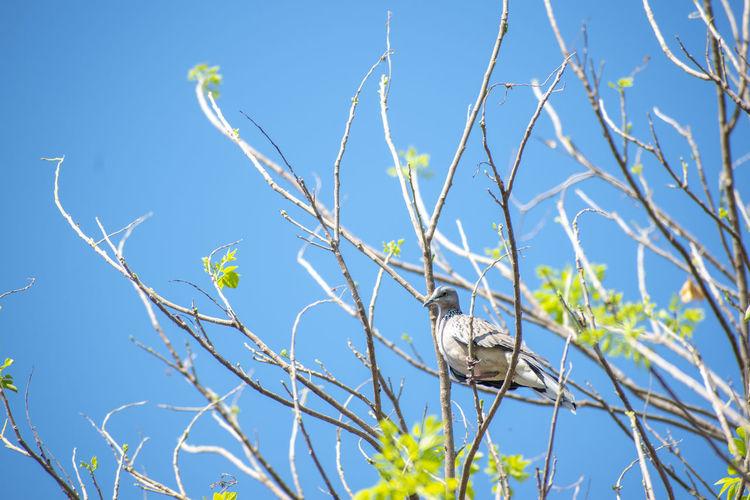 Plant Bird
