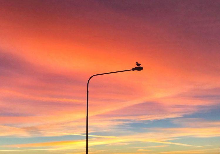 Sunset Sky Orange Color Silhouette Cloud - Sky Beauty In Nature Nature Bird Street Light