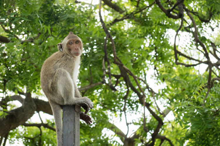 Animal Themes Beauty In Nature Branch Green Color Mammal Monkey Nature No People Outdoors Small Mokey Sitting On A Metal Pole With Blurry Green Tree Background Tree Wildlife